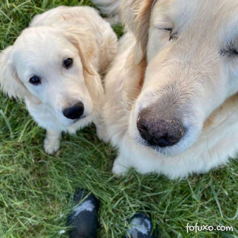 Cachorro cego ganha o seu próprio cão-guia 4