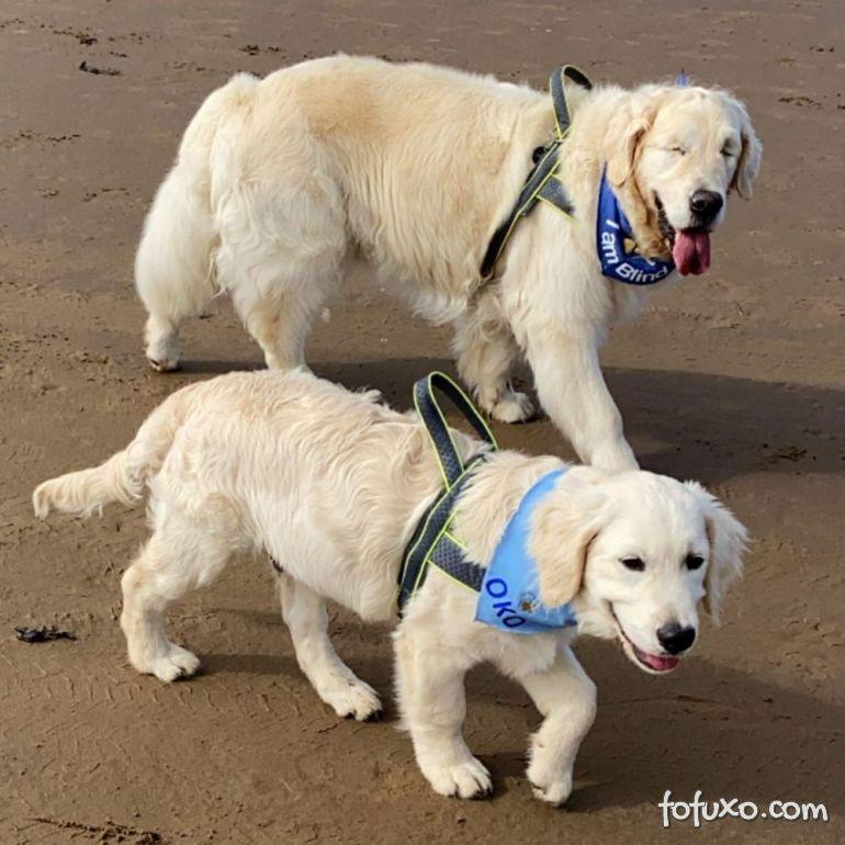 Cachorro cego ganha o seu próprio cão-guia 6