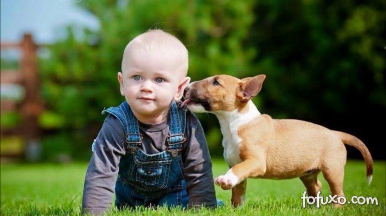 5 raças de cachorros para dar para os filhos no Dia Das Crianças