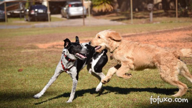 4 dicas para acalmar os cachorros mais agitados