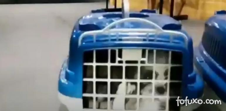 Filhotes de cachorros são resgatados em bagageiro de ônibus