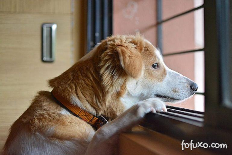 5 dicas importantes para criar cães dentro de apartamentos