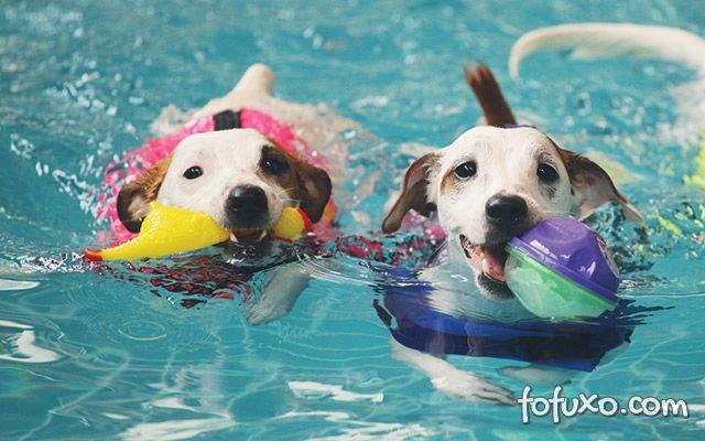 5 dicas para cachorros aproveitarem a piscina