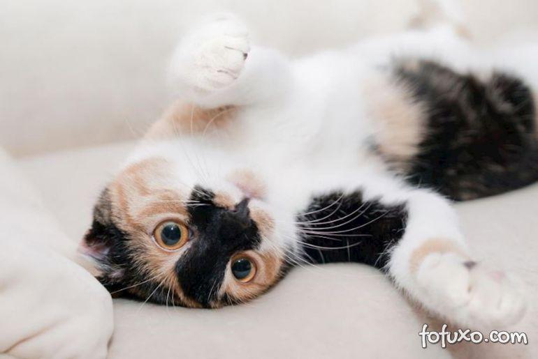 Gatos: você sabe identificar o sexo do seu pet?