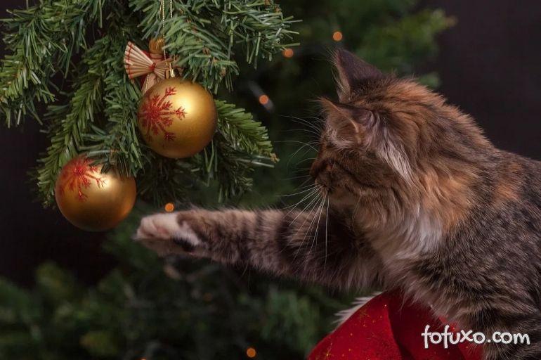 Árvores de natal: dicas para evitar que os gatos destruam