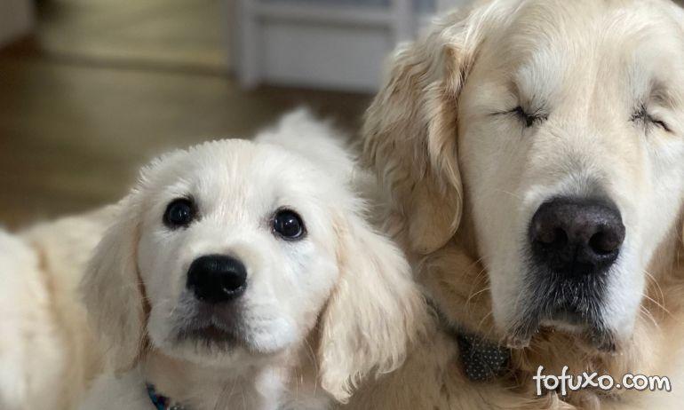 3 dicas para conviver bem com um cachorro cego