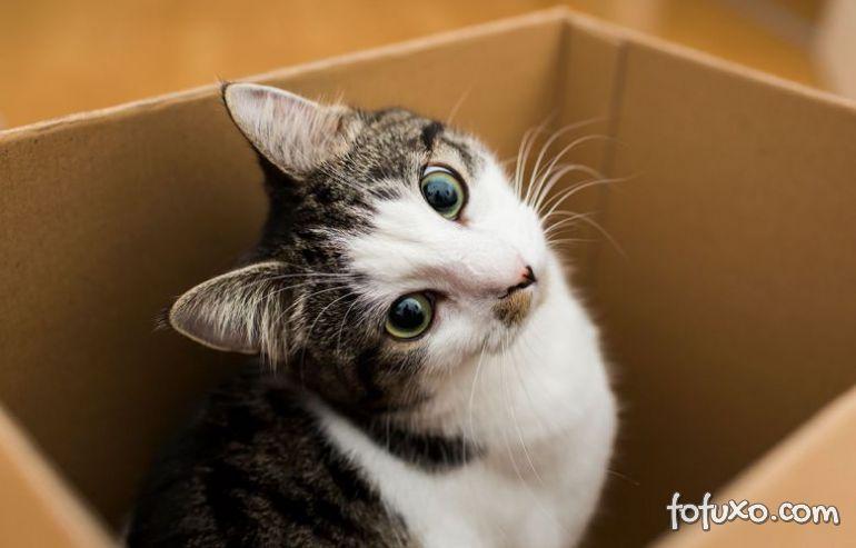 Gatos e caixas de papelão