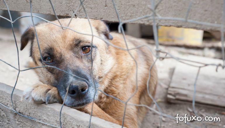 Diarreia em cães: confira algumas receitas naturais para aliviar o problema