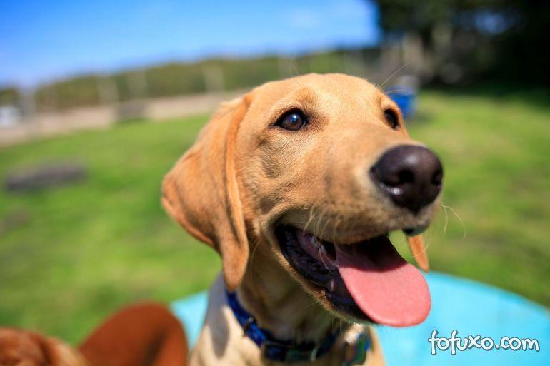 5 curiosidades do mundo dos cães