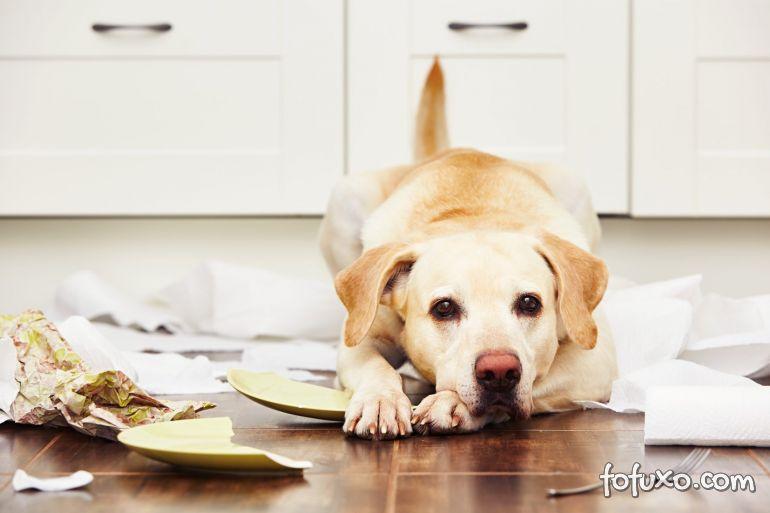4 dicas para lidar com o seu cachorro bagunceiro