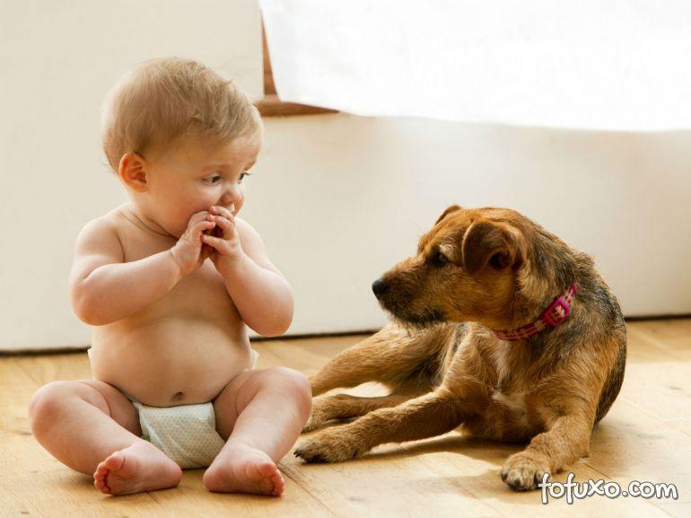 5 dicas para preparar o cão para a chegada do novo bebê