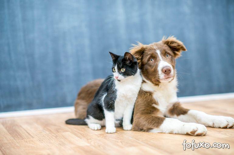 Seul anuncia testes em cães e gatos que apresentarem sintomas da Covid-19
