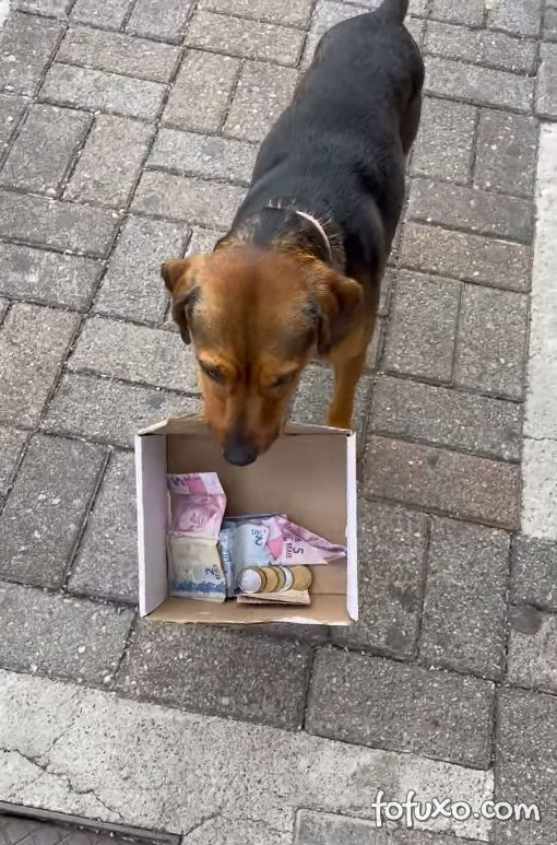 Cachorro ajuda dono a arrecadar dinheiro com caixinha