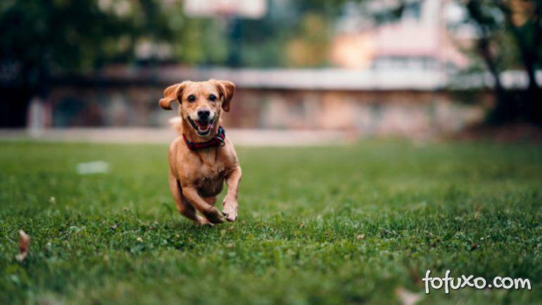 Dicas para passear com cachorros hiperativos na rua