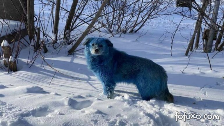 Cachorros azuis são resgatados na Rússia