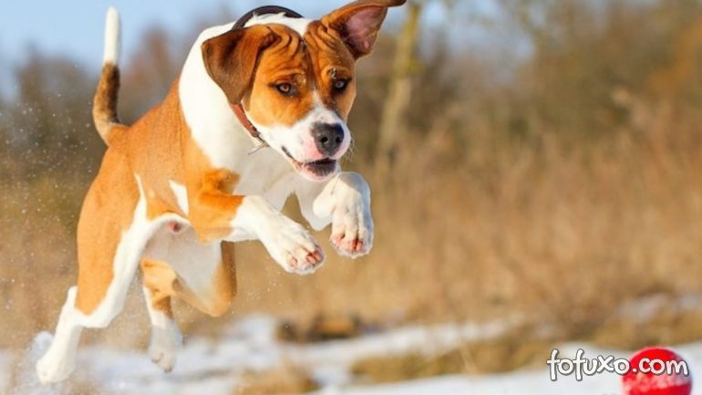 Dicas para ensinar o seu cachorro a não pular nas visitas