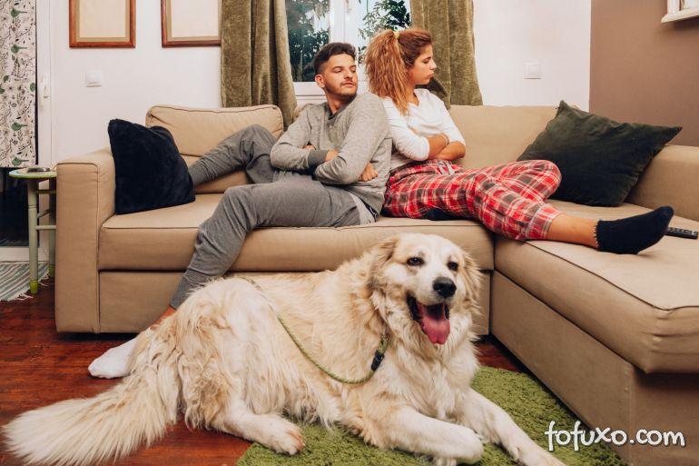 Juiz decide que homem deve pagar parte dos cursos de cachorro depois de divórcio
