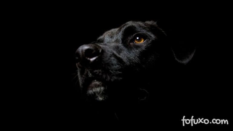 4 curiosidades sobre a visão do cachorro