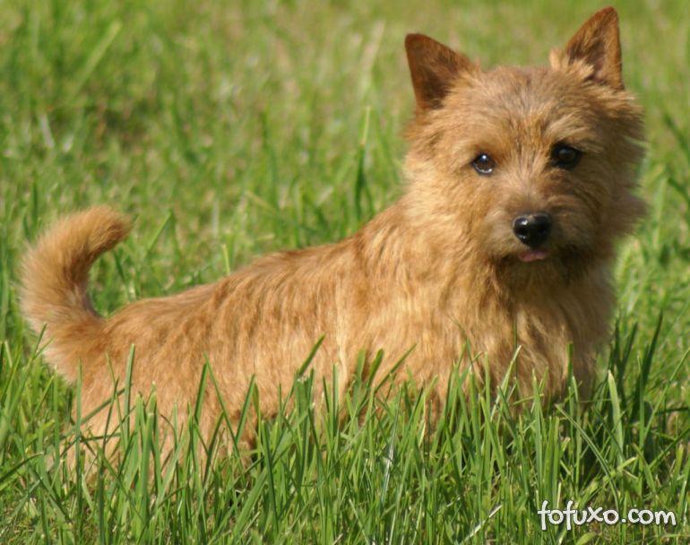 5 raças de cachorros consideradas exóticas e raras