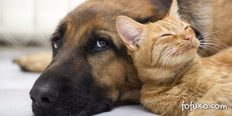 Pesquisadores encontram anticorpos contra Covid-19 em cão e gato de rua