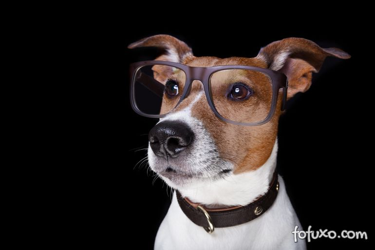 Estudo indica que cães podem entender 165 palavras
