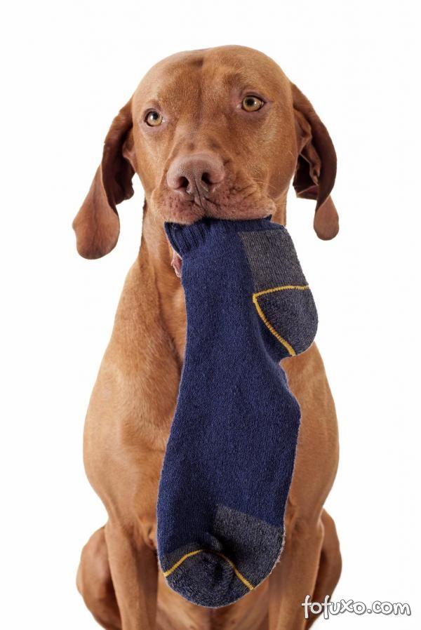 Por que os cachorros pegam e correm com as roupas dos donos?