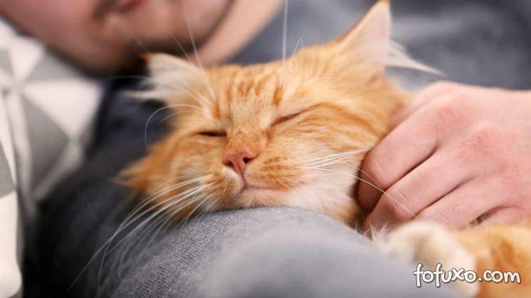 4 sinais de que o seu gato realmente te ama