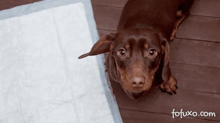 Dicas para usar melhor o tapete higiênico