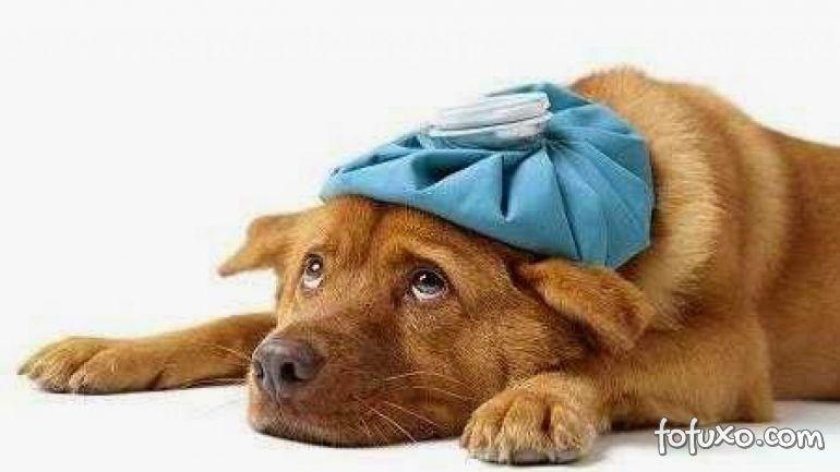 Pesquisa indica que um em cada cinco cães vai desenvolver câncer