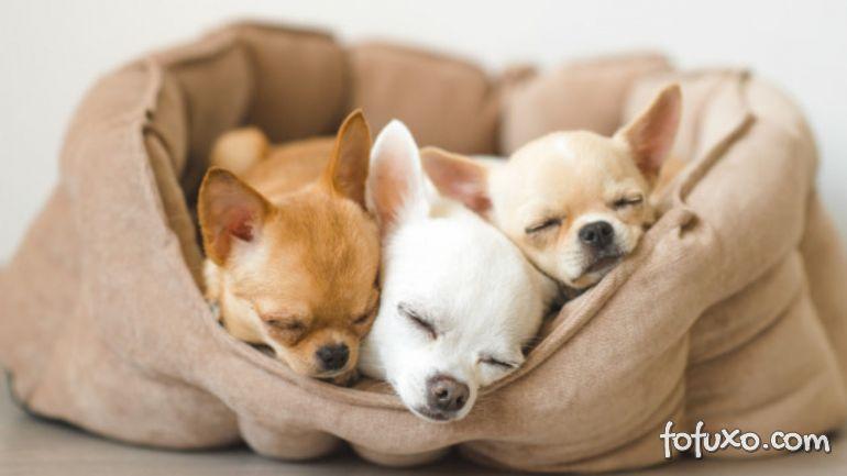 5 raças de cães que podem viver muitos anos