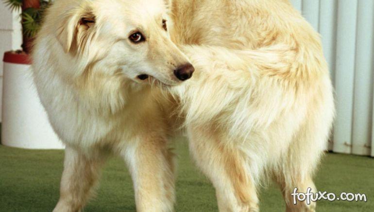 Cachorro correr atrás do próprio rabo pode ser sintoma de doença