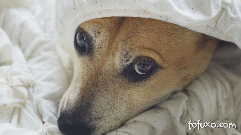 Conheça alguns sinais de que o seu cachorro pode estar com infecção intestinal