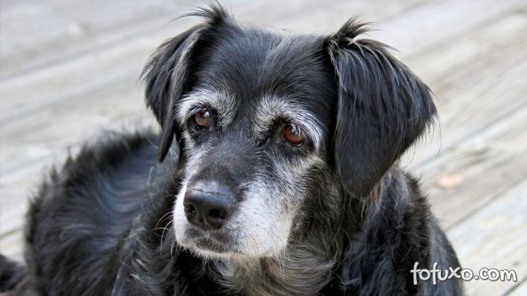 Dicas para ensinar os cães mais velhos a hora e o local de fazer suas necessidades