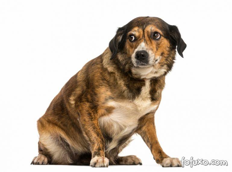 Pesquisa afirma que cães podem te ignorar quando sabem que você está mentindoPesquisa afirma que cães podem te ignorar quando sabem que você está mentindo