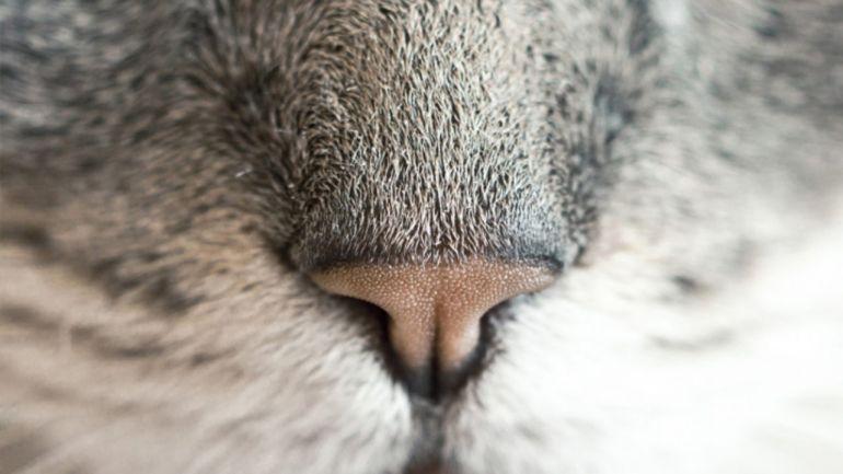 Conheça alguns cheiros que os gatos simplesmente odeiam