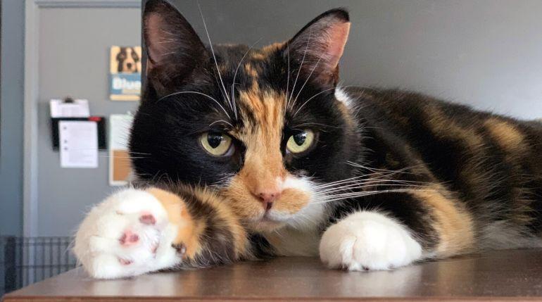 5 dicas para conseguir tirar uma foto perfeita do seu gato