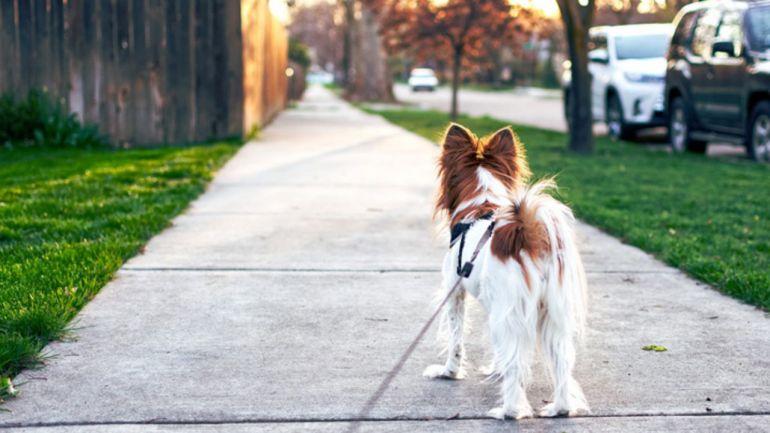 Saiba como deixar o passeio com seus cães mais seguro e saudável