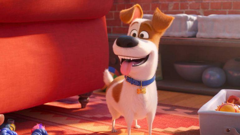 5 filmes com cachorros para ver na Amazon Prime
