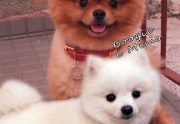 Boogie e Mimo