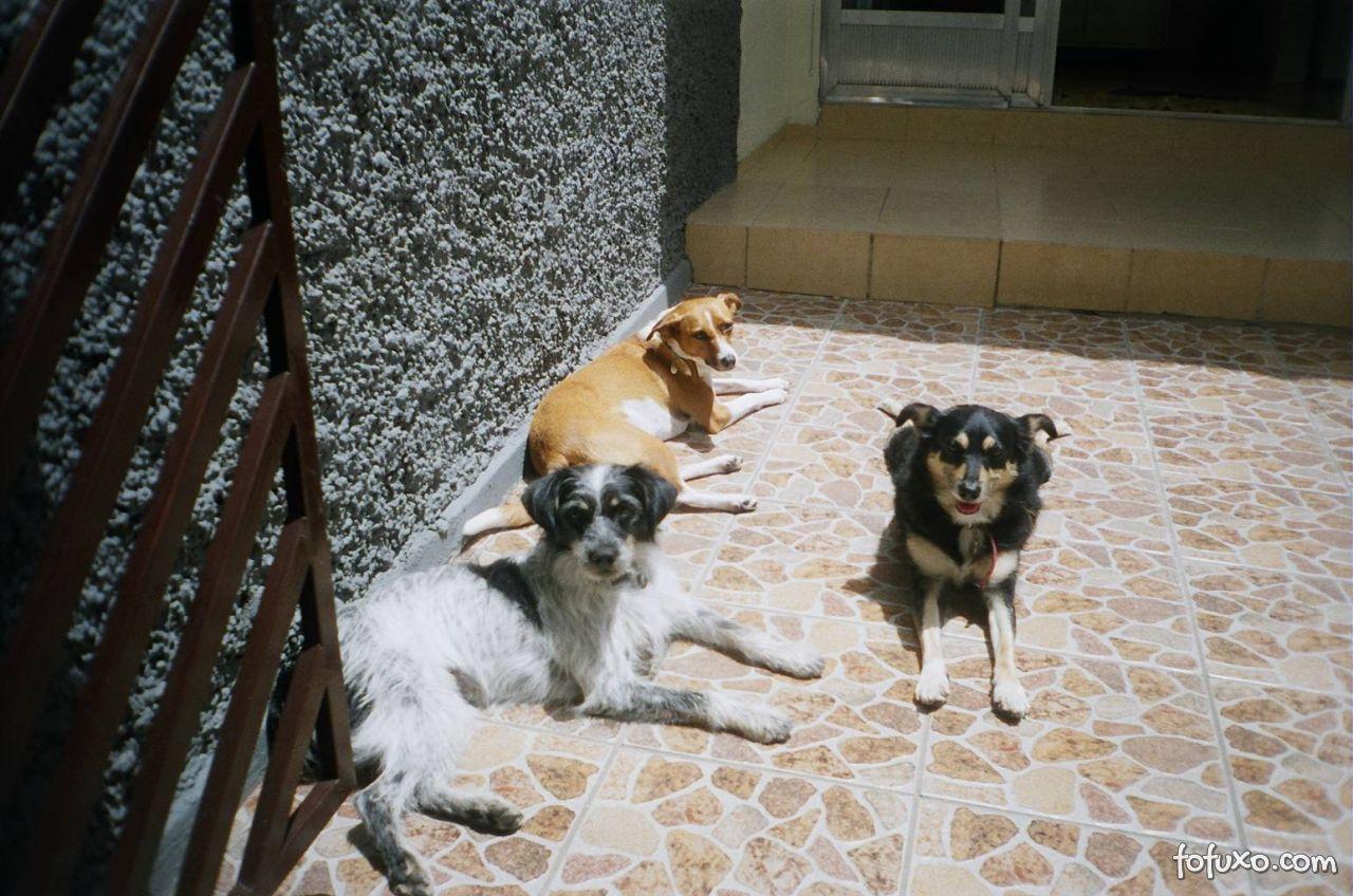 Lili, Astor e Mel