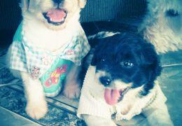 Marley e Max