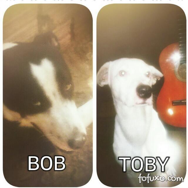 Toby e Bob