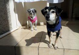 Lili e Toby