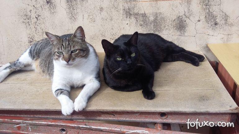 Fabinho e Floriano