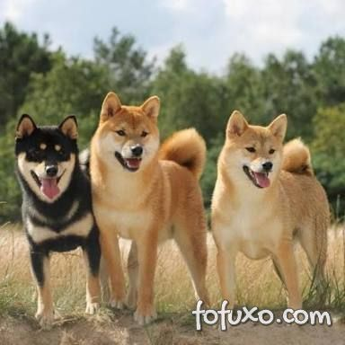 Thor, Bella e Yuri