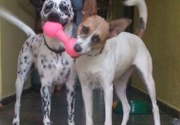 Lyla e Vitoria